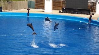 oceanografic animales 16
