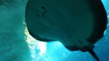 oceanografic animales 2